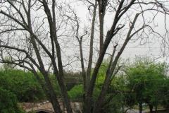 pruning3