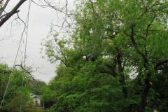 pruning4