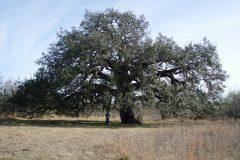 Tree Specimens